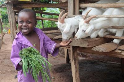 india-purpleshirt-goats